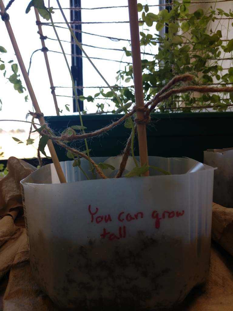 Our plants got some positive inspiration to grow today!#classroomgarden